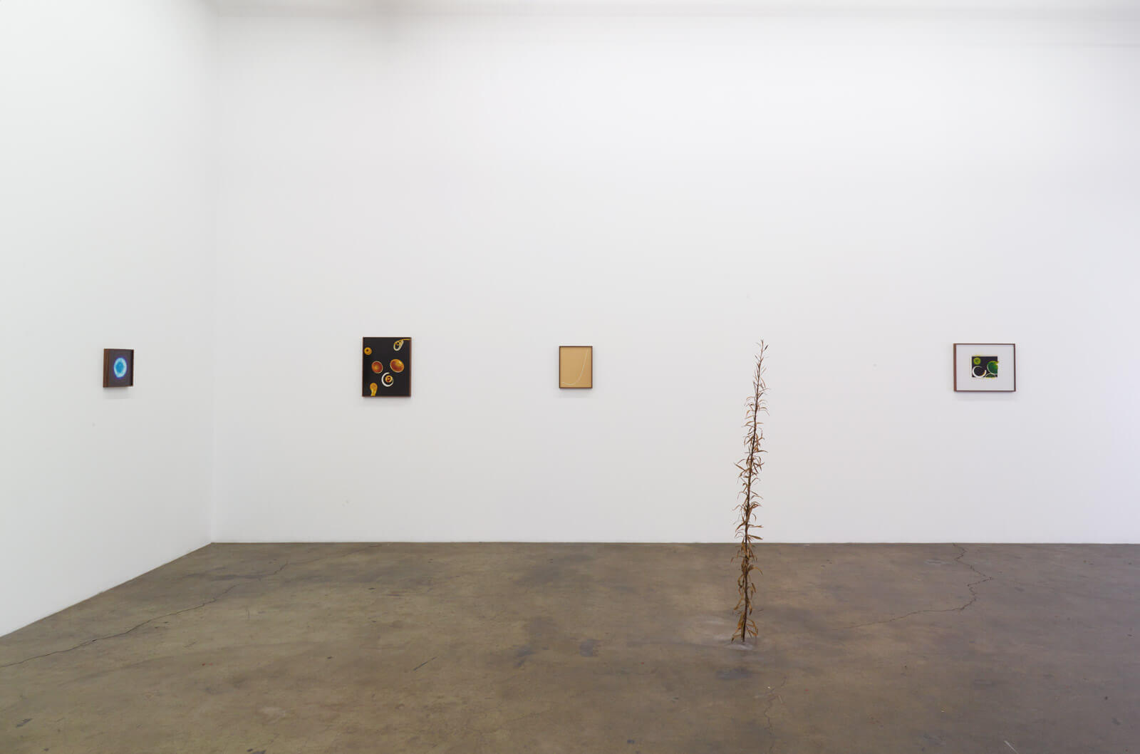 4_kelly-akashi-being-as-a-thing-installation-view
