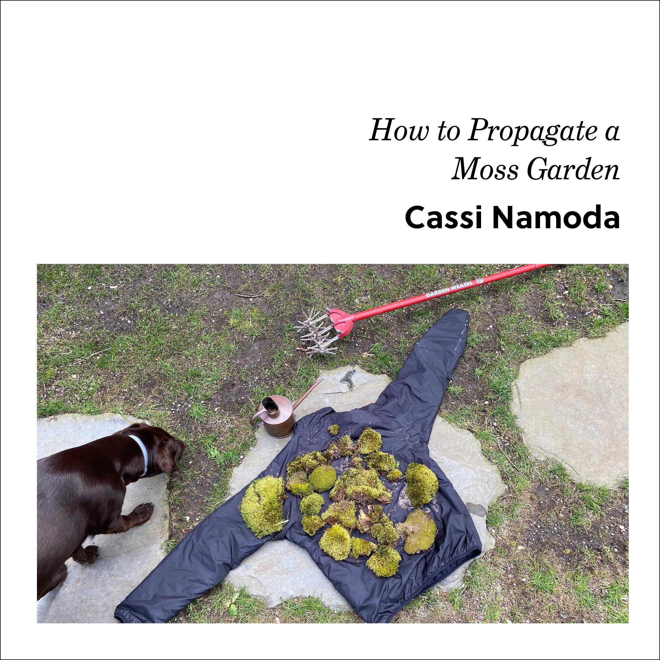 Week 2: Cassi Namoda