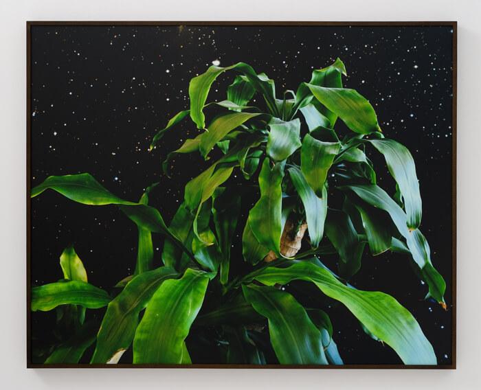 lepore_spaceplant_2012_web