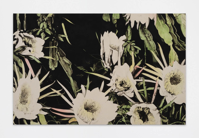 Mann, Nightblooming Cereus, 2017 (BM 17.001)