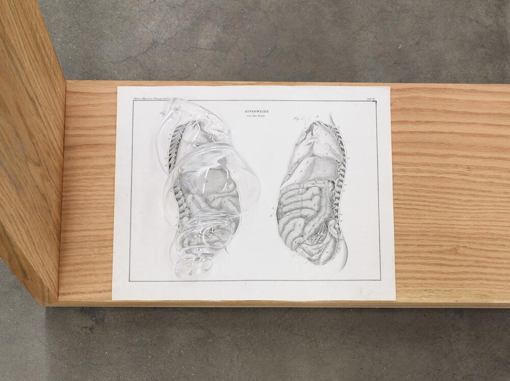 Akashi, Body Complex, 2019 (KA 19.016) G